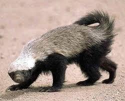 Honey Badger Don't Care…About TrademarkBattles.